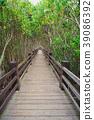 红树林 39086392