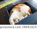 고양이, 박스, 골판지 39091824