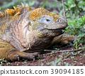 동물, 파충류, 에콰도르 39094185