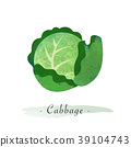 甘藍 包菜 椰菜 39104743