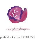 紫色 紫 甘藍 39104753