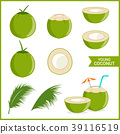 Set of fresh young coconut in vector format 39116519