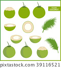 Set of fresh young coconut in vector format 39116521