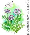 flower, flowers, lotus flower 39116601