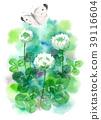 ดอกไม้,ผีเสื้อ,โคลเวอร์ 39116604