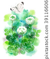 white clover, flower, small cabbage white butterfly 39116606