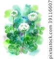 white clover, flower, flowers 39116607