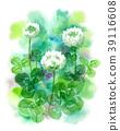 white clover, flower, flowers 39116608