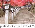 maple, yellow leafe, kanagawa prefecture 39117475