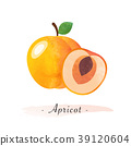 apricot, watercolor, fruit 39120604