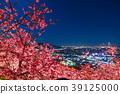 """""""จังหวัดคานางาวะ"""" มัตสึโอกะ - โชฮิลล์แห่งดอกซากุระยามค่ำคืน 39125000"""