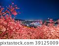 """""""จังหวัดคานางาวะ"""" มัตสึโอกะ - โชฮิลล์แห่งดอกซากุระยามค่ำคืน 39125009"""