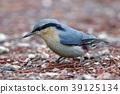 Chestnut-vented Nuthatch Beautiful Bird 39125134