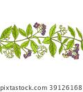 allspice, spice, leaf 39126168
