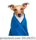 dog in  wellness spa 39126251