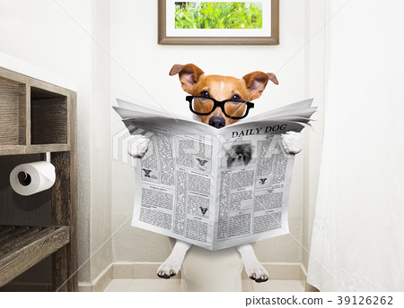 dog on toilet seat reading newspaper 39126262