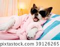 animal, bathrobe, dog 39126265