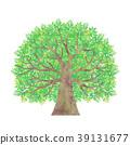 wood, large, tree 39131677