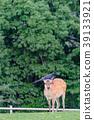 若草山 鹿 動物 39133921