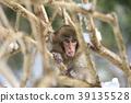 원숭이 39135528