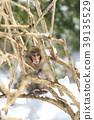 一隻猴子 39135529