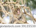 원숭이 39135530