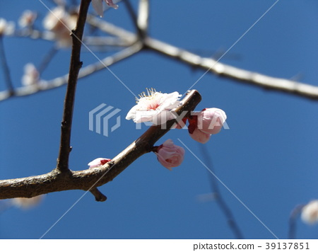 花朵 花卉 花 39137851