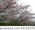 Flower of full bloom Inagekaigan Ekimae 39139376