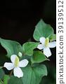 삼백초, 하수오, 꽃 39139512