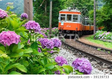 Hydrangea blooming Hakone mountain climbing railway 39139733