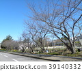 푸른, 벚꽃길, 가로수 39140332
