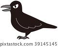 烏鴉 禽 鳥兒 39145145