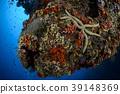 海星 珊瑚 珊瑚礁 39148369
