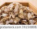 菊科植物 紫菀科的 菊科 39150806