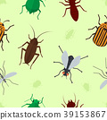 Fly insects wildlife entomology bug animal nature 39153867