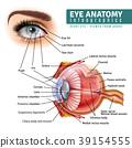 Realistic Eye Anatomy Infographics 39154555