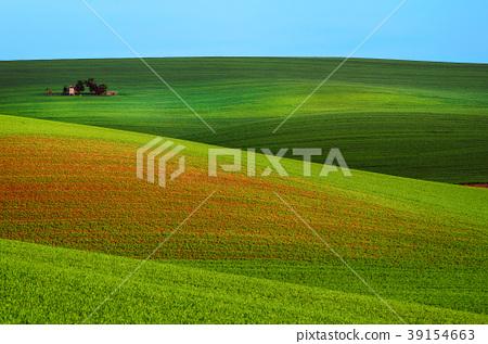 Rural spring landscape 39154663
