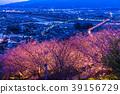 """""""จังหวัดคานางาวะ"""" มัตสึโอกะ - โชฮิลล์แห่งดอกซากุระยามค่ำคืน 39156729"""