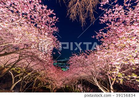 ฤดูใบไม้ผลิ,ดอกซากุระบาน,ซากุระบาน 39156834