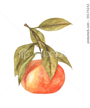 mandarin with leaves. Watercolor illustration. 39174242