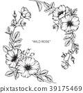 Wild rose flower drawing illustration.  39175469