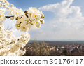 Flowering tree with bee and european city behind 39176417