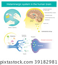 Histaminergic  system in the human brain. 39182981