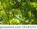 猩猩 野生 樹木 39183252