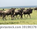 塞倫蓋蒂國家公園 39196376