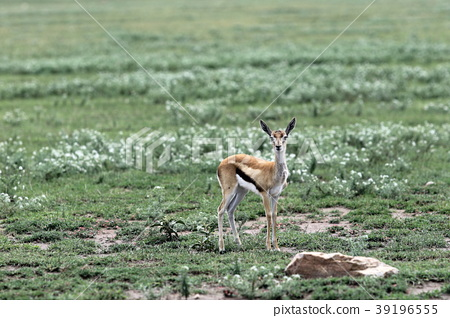 동물, 야생 동물, 들짐승 39196555
