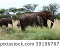 塞倫蓋蒂國家公園 動物 野生動物 39196767
