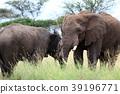 塞倫蓋蒂國家公園 動物 陸生動物 39196771