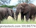 塞倫蓋蒂國家公園 動物 野生動物 39196774