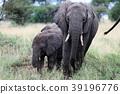 塞倫蓋蒂國家公園 動物 野生動物 39196776